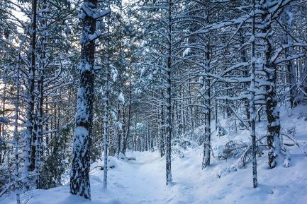 bosc de Tornafort nevat